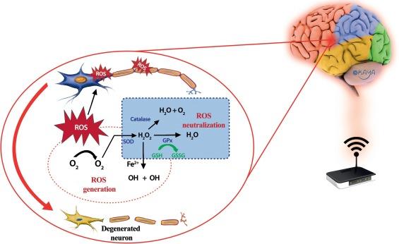 Электро-магнитное излучение снижает уровень мелатонина