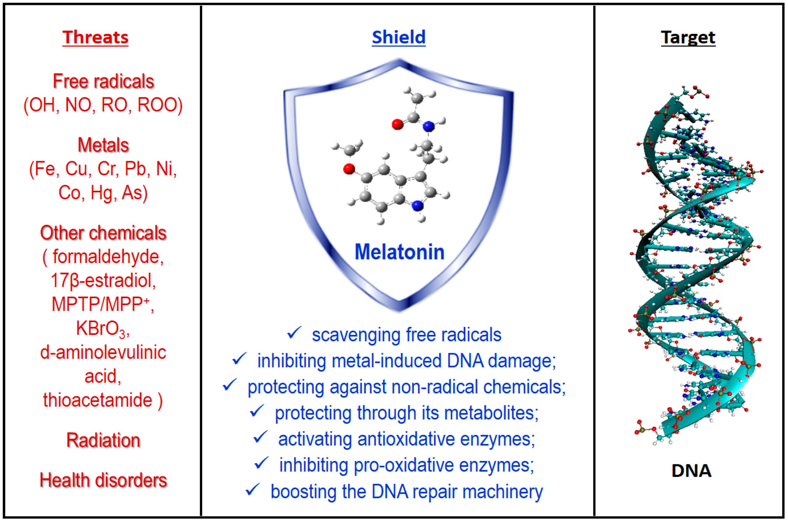 Мелатонин защищает ДНК клеток