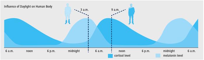 Пики выработки мелатонина и кортизола в течение суток