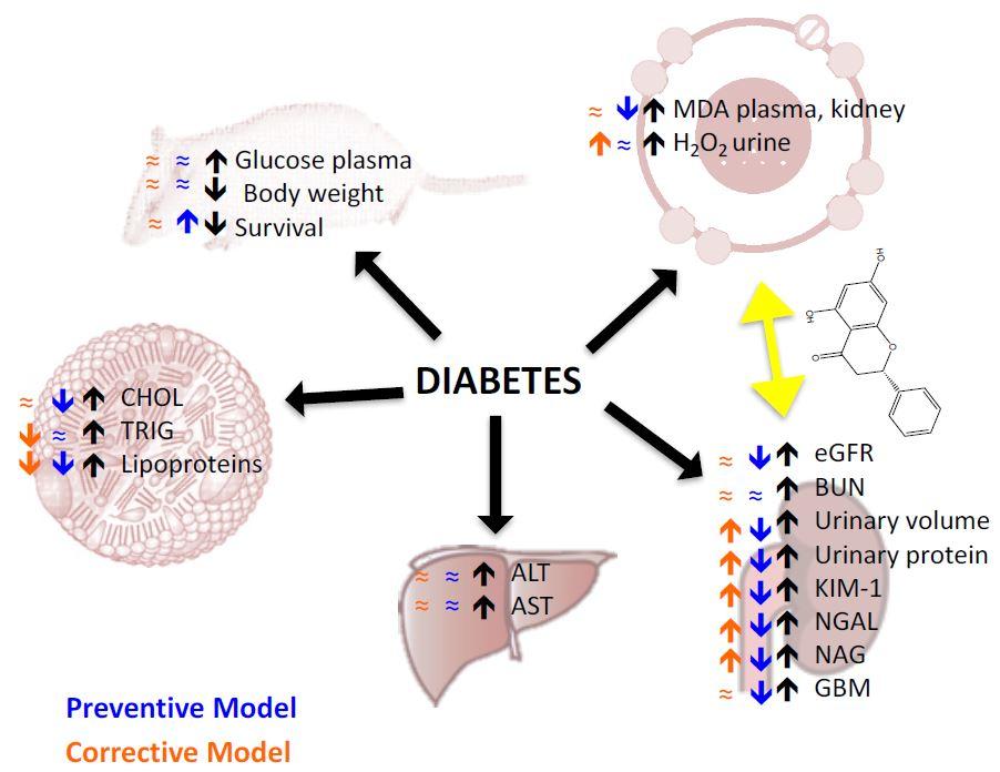Прополис помогает предотвратить нефропатию при диабете