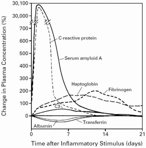 Выработка белков острой фазы