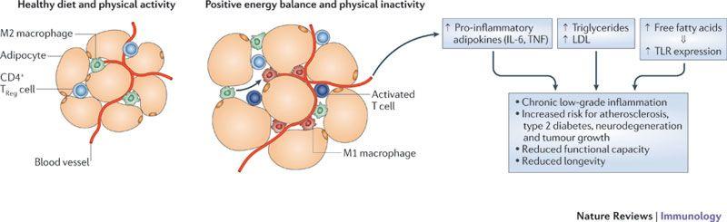 Физическая нагрузка снижает воспаление