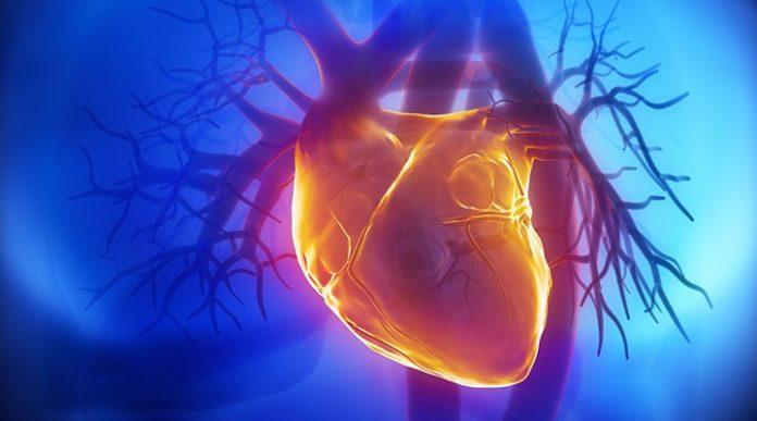 Гомоцистеин - показатель смертности от сердечно-сосудистых заболеваний