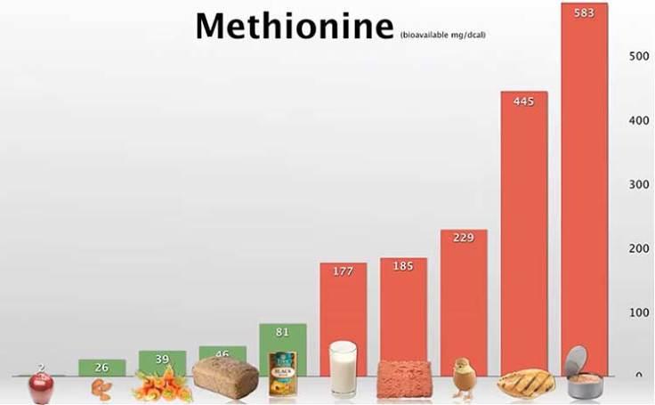 Продукты питания богатые метионином