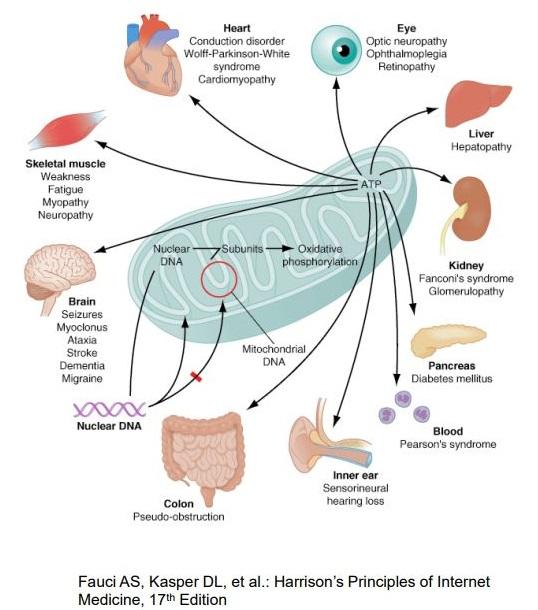 Заболевания, связанные с нарушением работы митохондрий