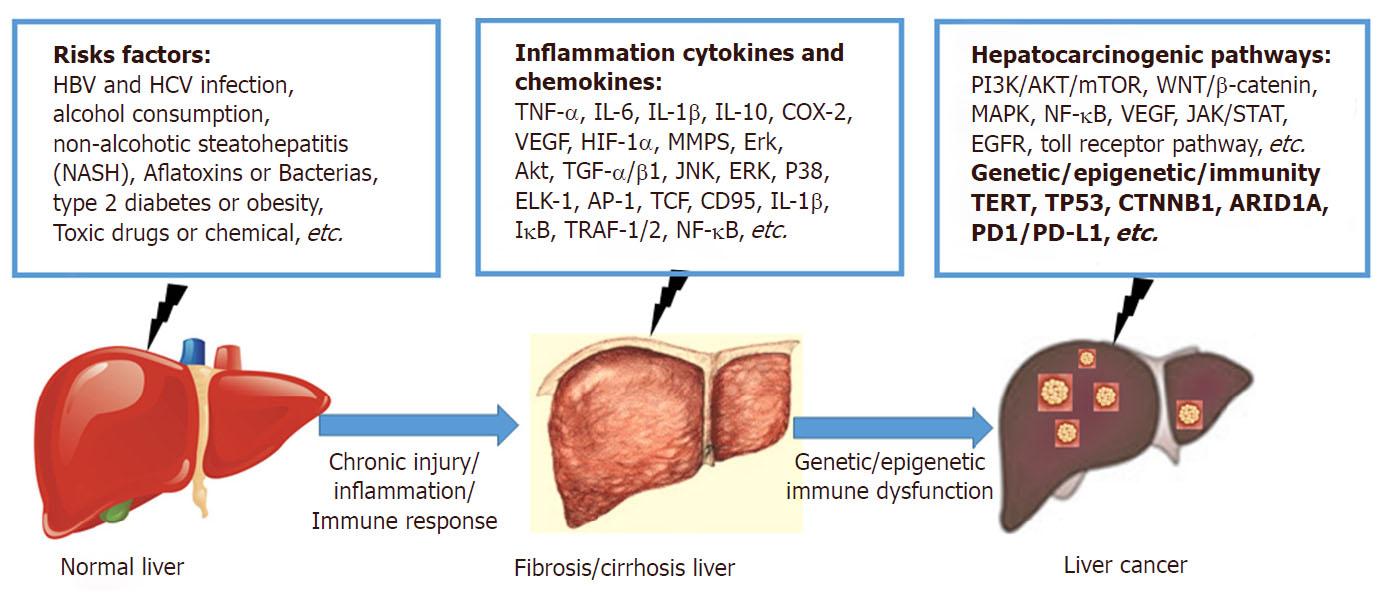 Процесс развития рака печени