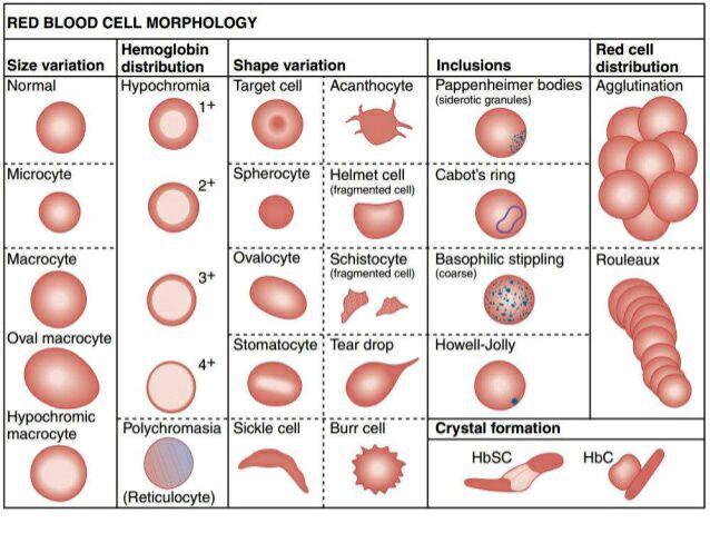 Аномальные эритроциты