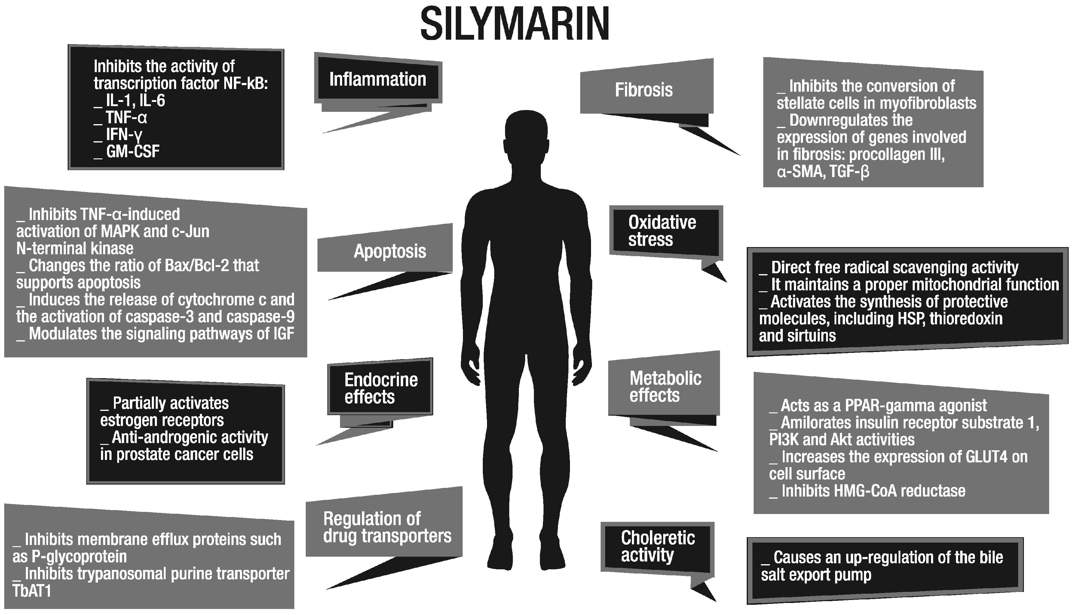 Различные терапевтические цели силимарина