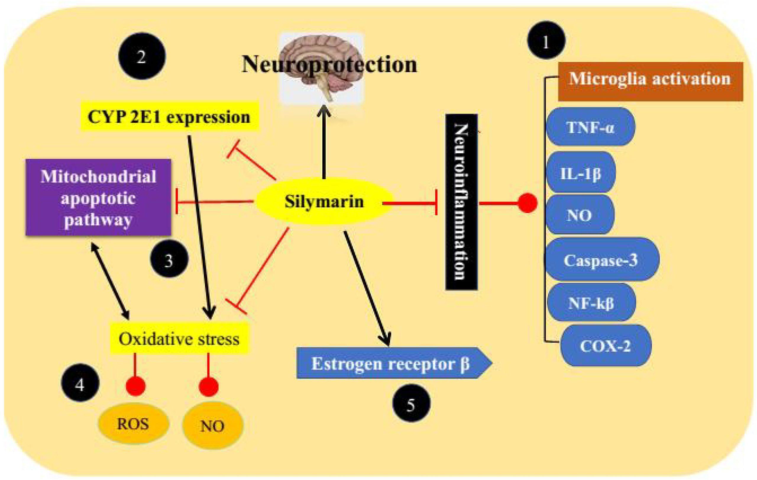 Силимарин в лечении болезни Паркинсона