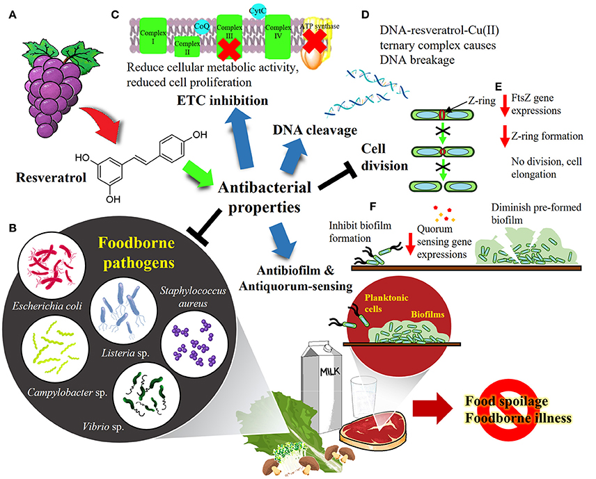 Ресвератрол дествует проьив бактерий в пищевых продуктах