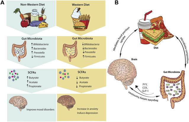 Влияние питания на развитие нейродегенеративных заболеваний