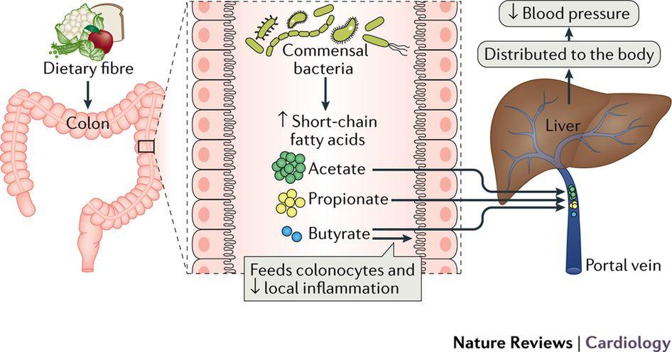 Клетчатка уменьшает кровяное давление
