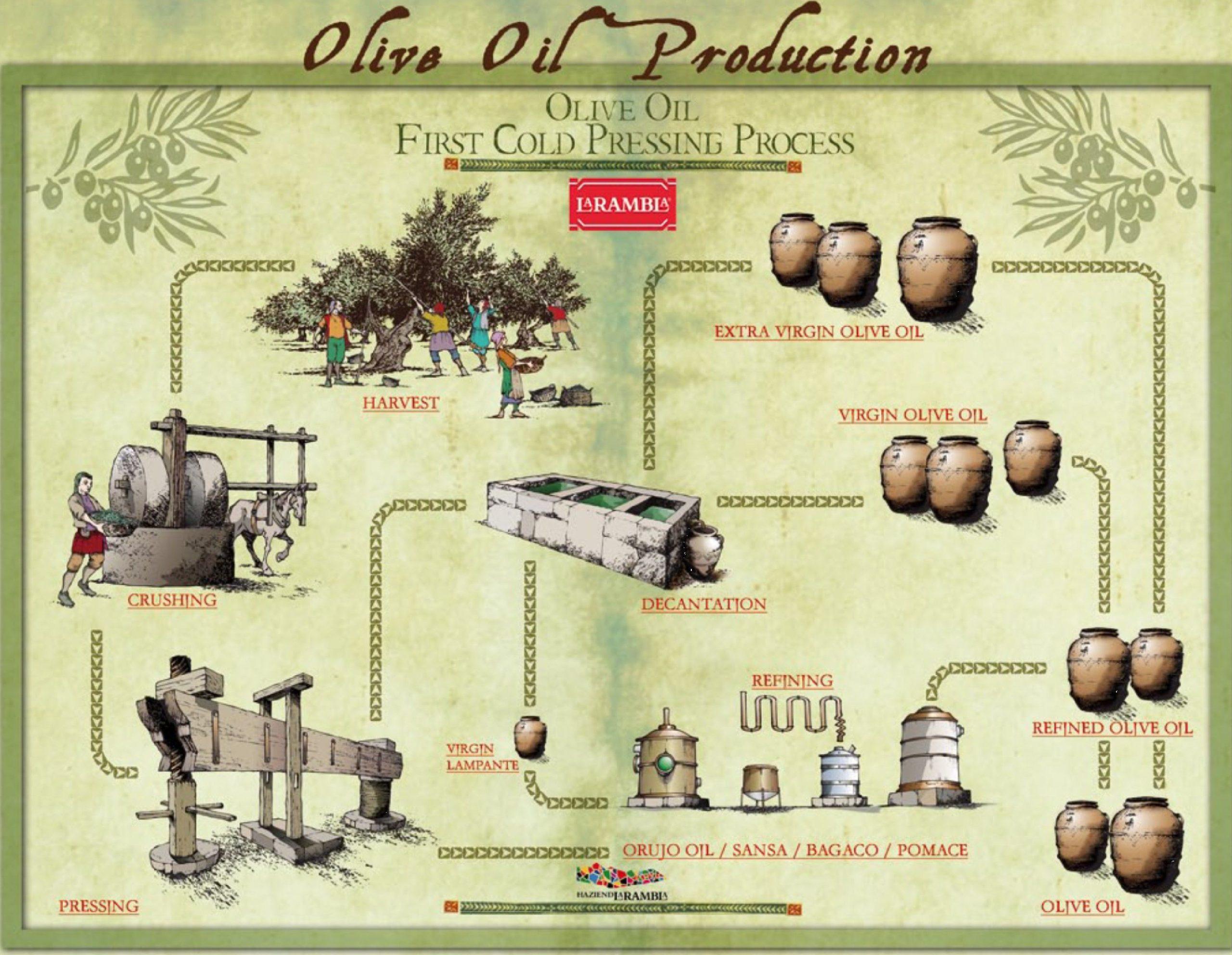 Схема производства оливкового масла первого холодного отжима
