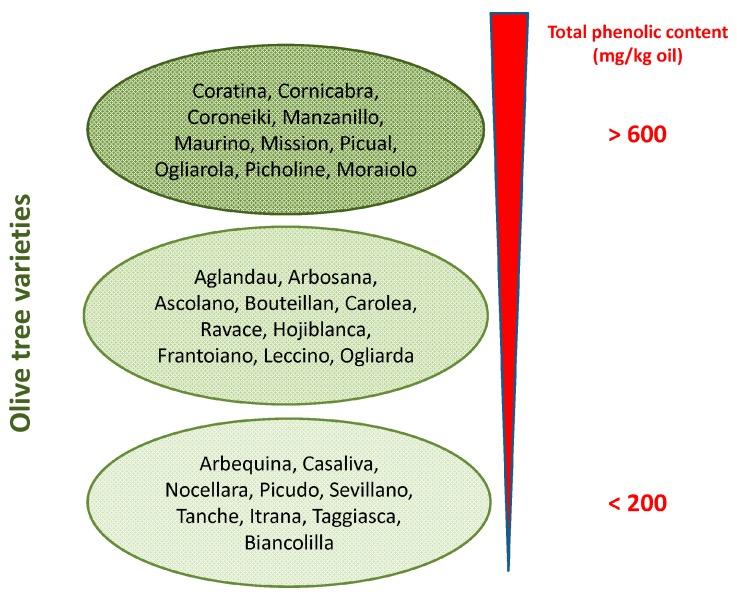 Содержание полифенолов в оливковом масле