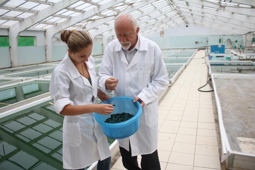 Производство спирулины в России