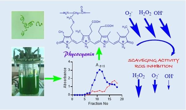 Фикоцианин проявляет свойства антиоксиданта
