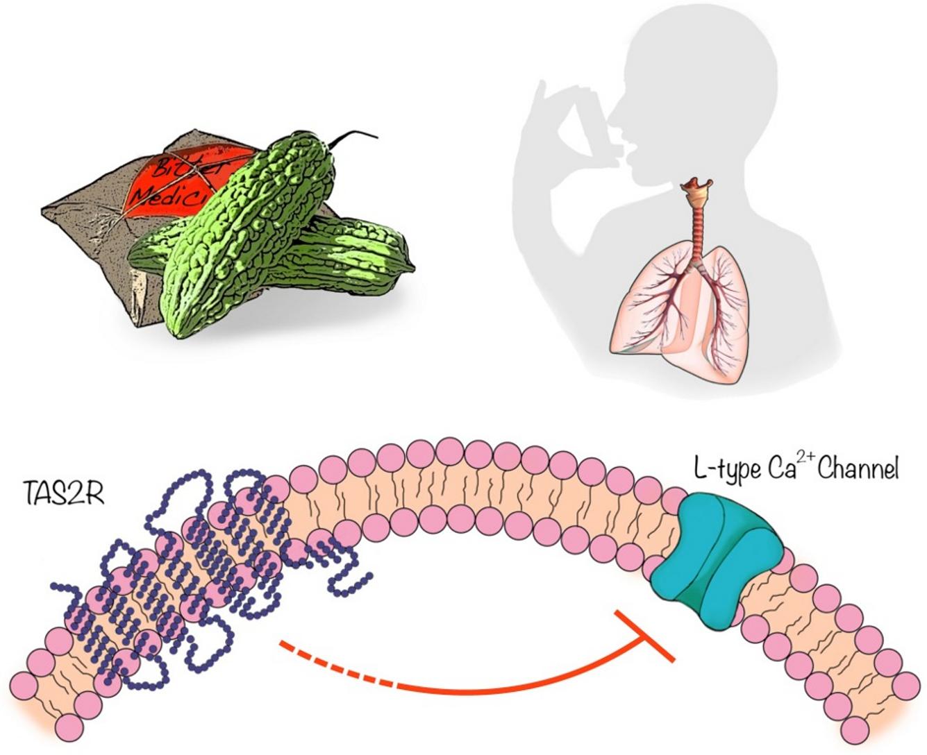 Горькая дыня для лечения астмы