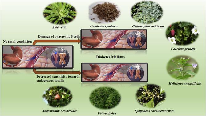 Растения, применяемые для лечения сахарного диабета