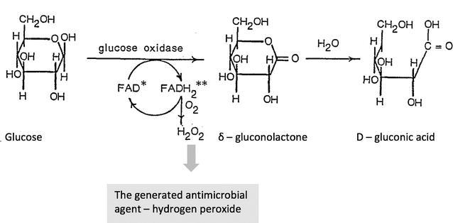 Перекись водорода - антимикробное свойство мёда