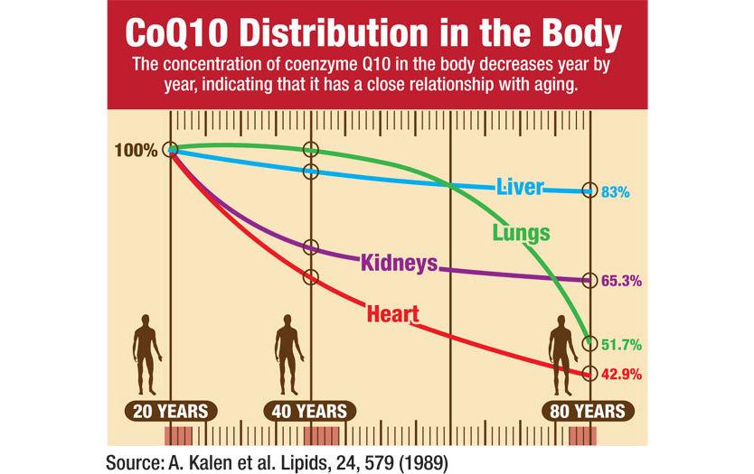 Коэнзим Q10 бс возрастом снижается быстрее в сердце