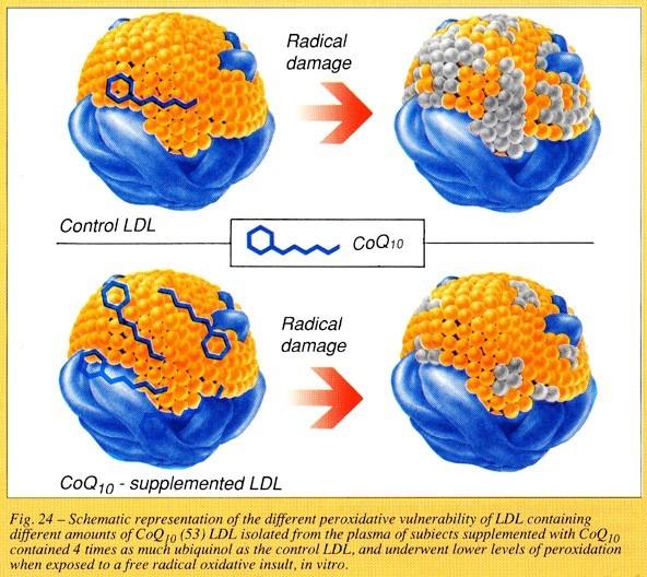 Коэнзим Q10 снижает окислительный стресс