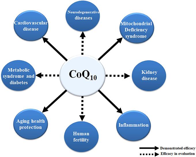 Коэнзим Q10 оказывает положительное влияние на здоровье