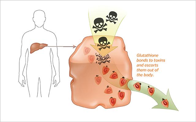 Глутатион избавляет организм от канцерогенов