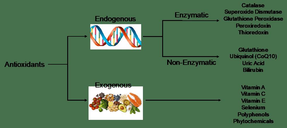 Виды антиоксидантов