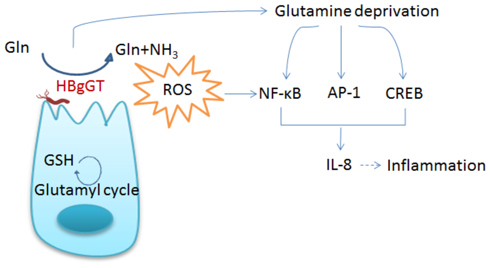 Глутатион снижает воспаление