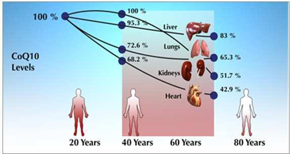 Старение уменьшает содержание коэнзима Q10
