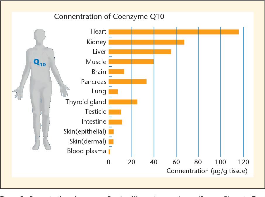 Наибольшее количество коэнзима Q10 содержится в сердце