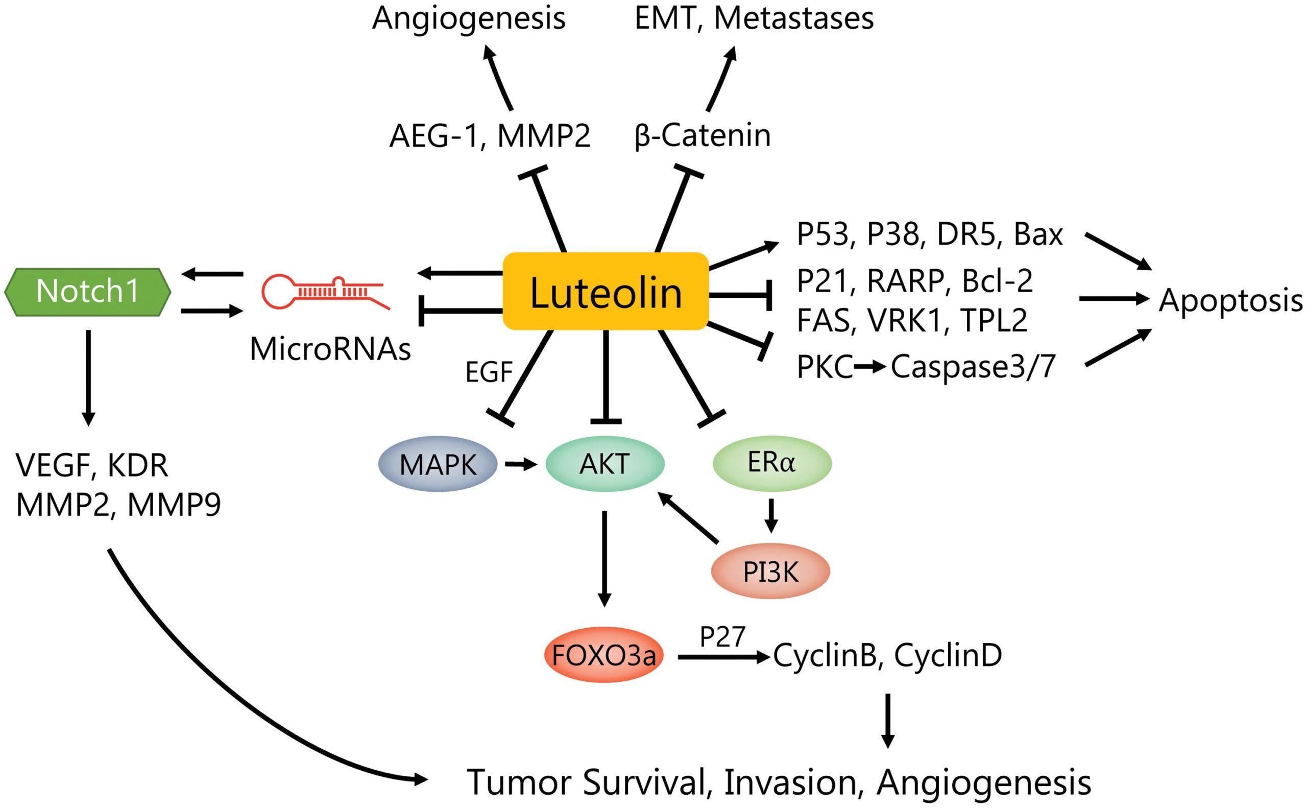 Лютеолин подавляет клетки рака молочной железы