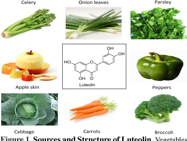 Лютеолин в продуктах питания