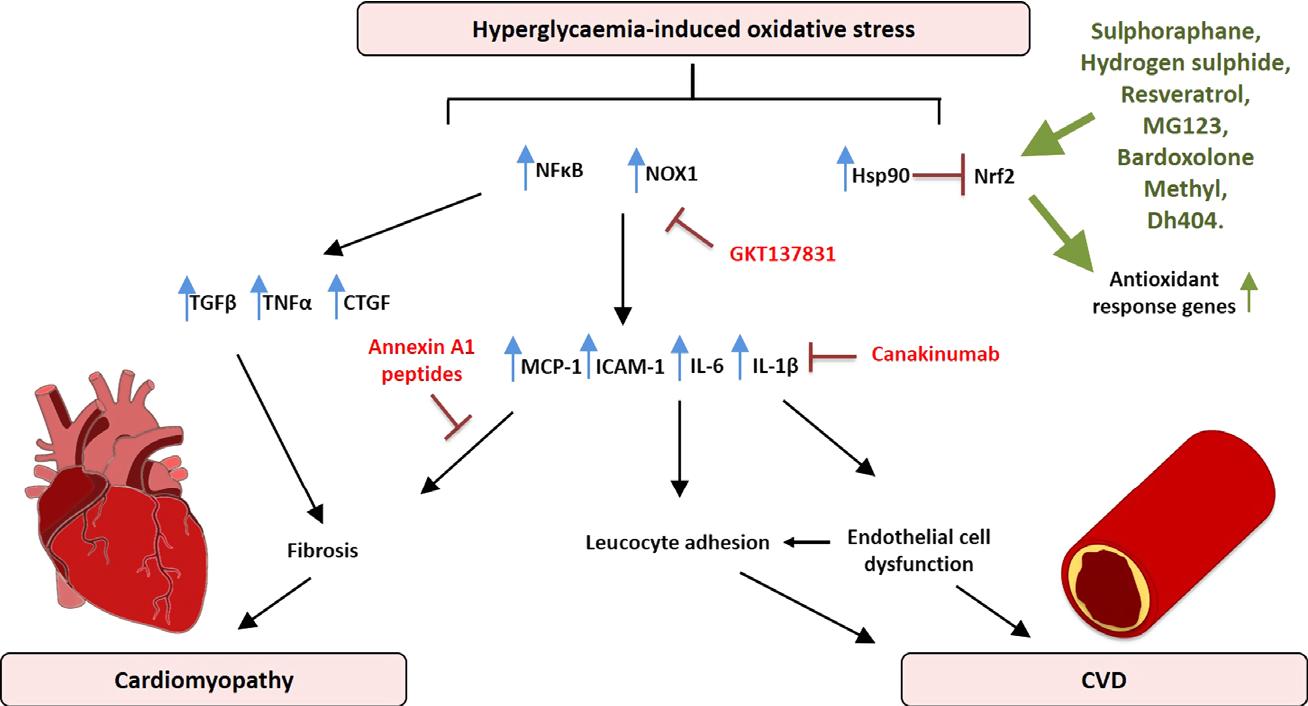 Окислительный стресс приводит к осложнениям при диабете