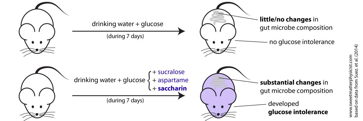 Искусственные подсластители нарушают микрофлору кишечника