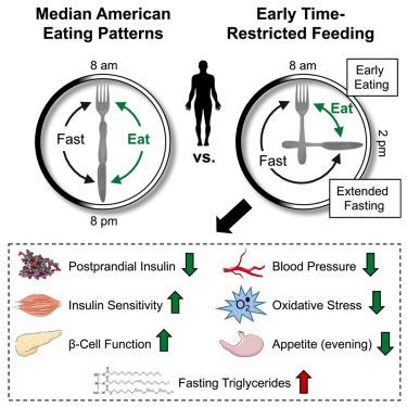 Периодическое голодание меняет метаболизм