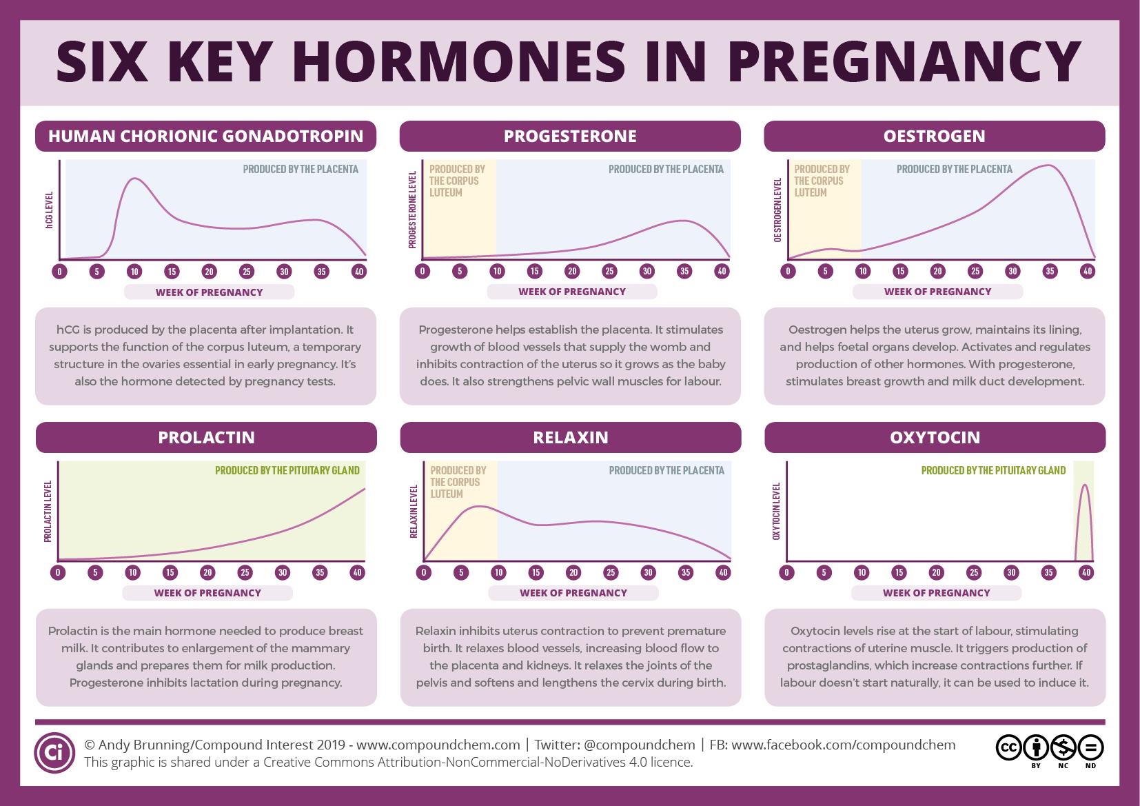 Ключевые гормоны беременности