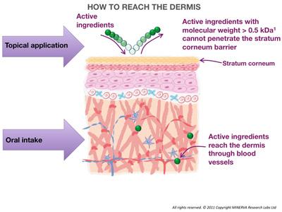 Коллаген из крема не может проникнут внутрь кожи