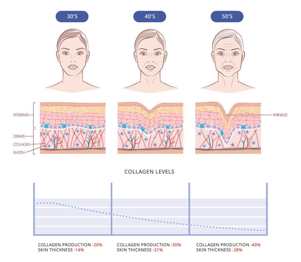 Количество коллагена в коже уменьшается с возрастом