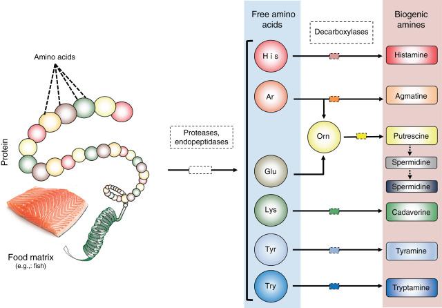 Биогенные амины в продуктах животного происхождения