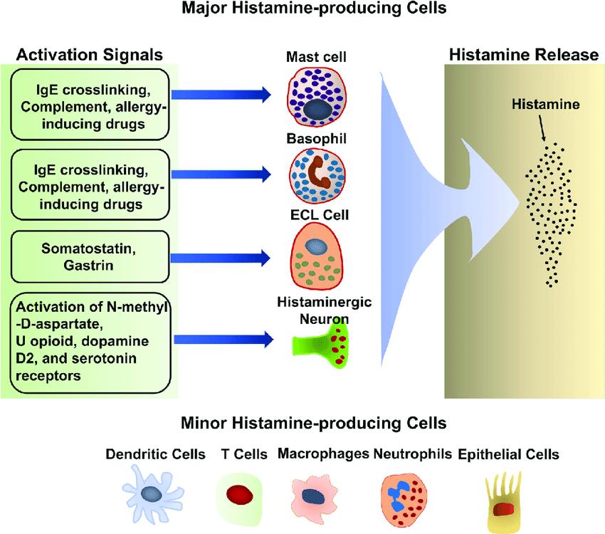 Стимулы и иммунные клетки, высвобождающие гистамин