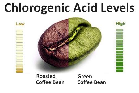 Хлорогеновая кислота содержится в зернах кофе