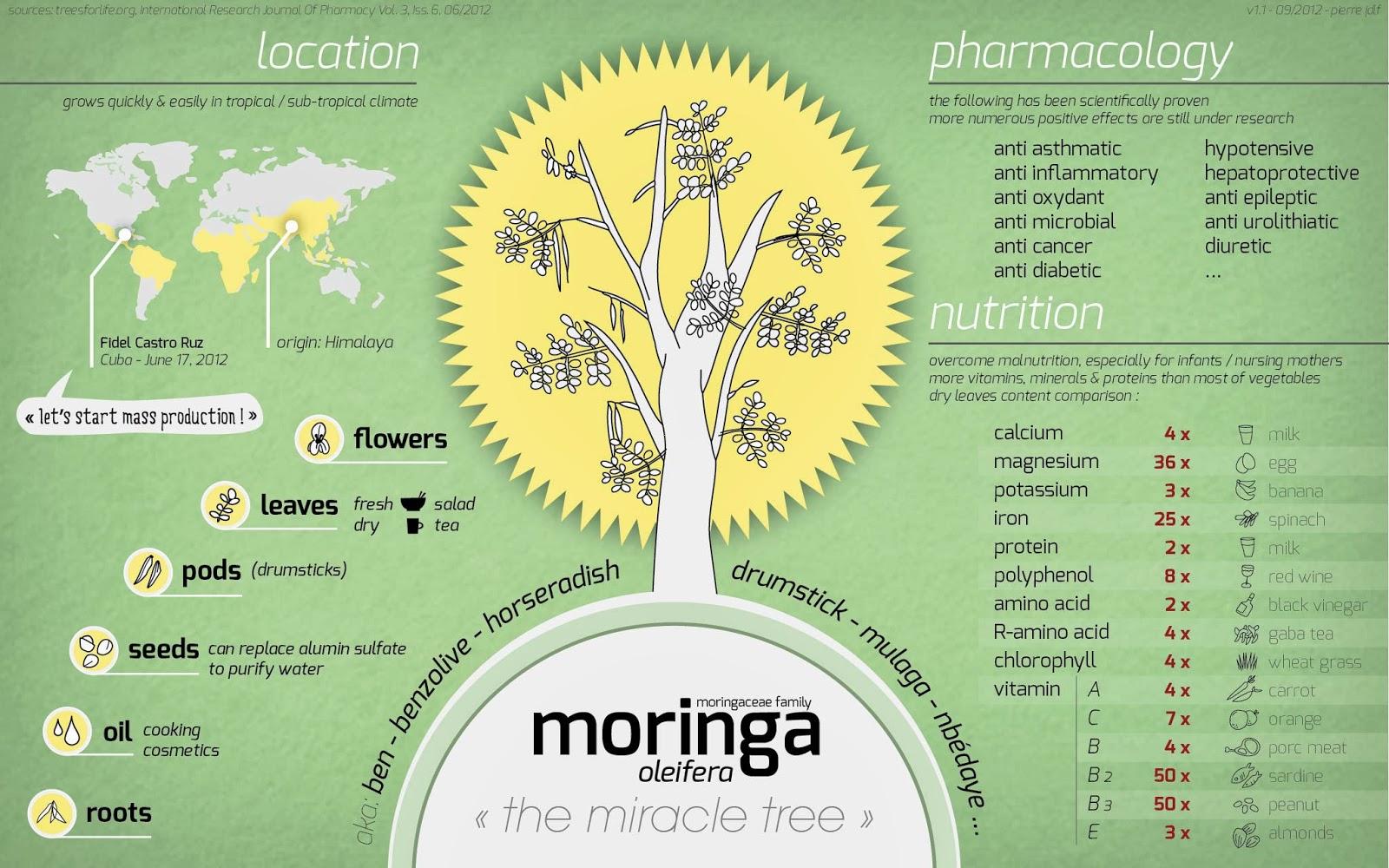 Моринга - польза для здоровья