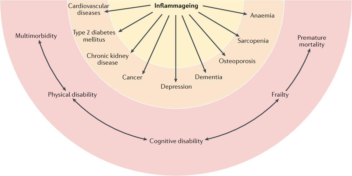 Воспаление при старении приводит к хроническим болезням