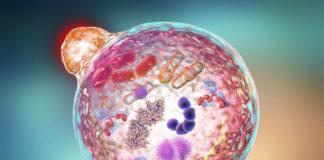 Аутофагия клетки