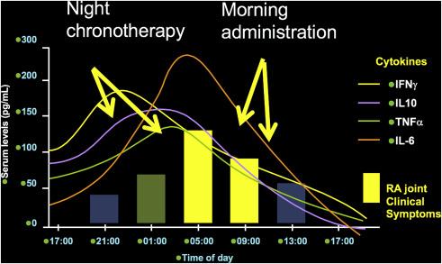 Выработка воспалительных цитокинов зависит от времени суток