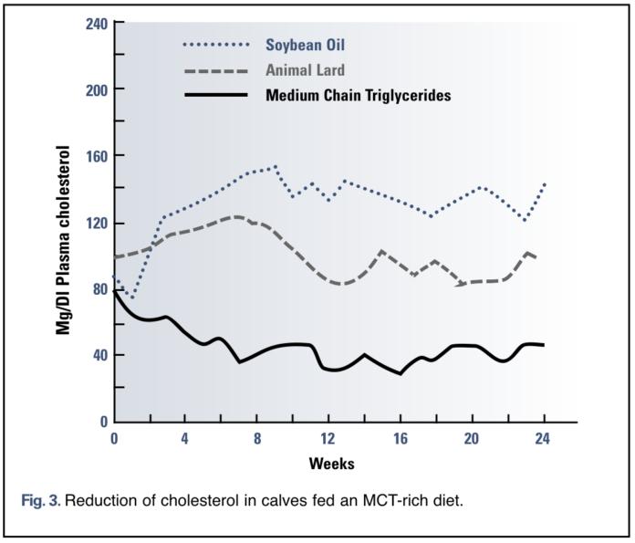 Кокосовое масли снижает содержание холестерина в крови
