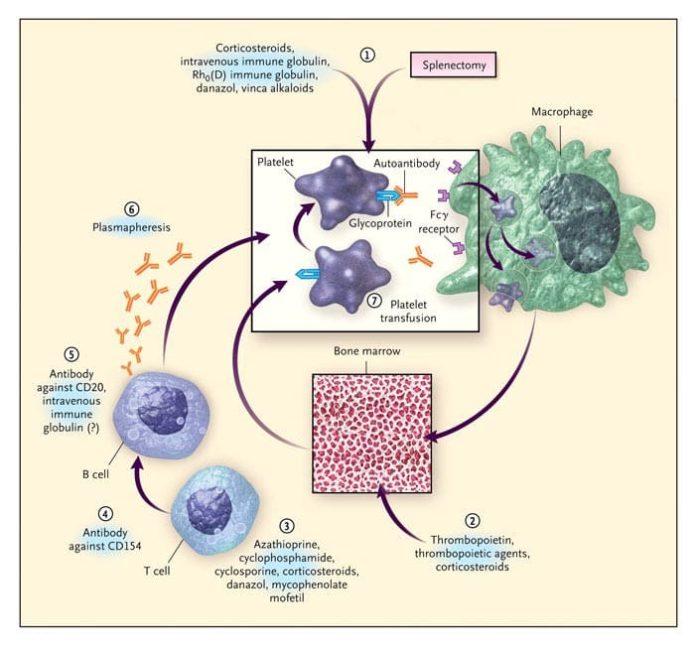 Схема иммунной реакции