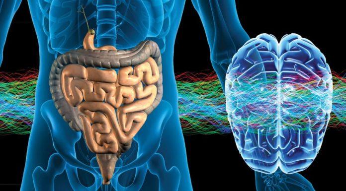 Связь мигрени и микрофлоры кишечника.