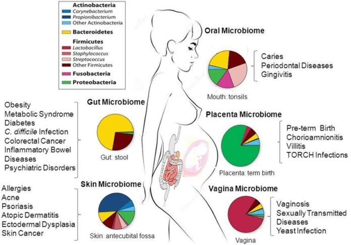 Микрофлора населяет организм женщины, попадая в грудное молоко